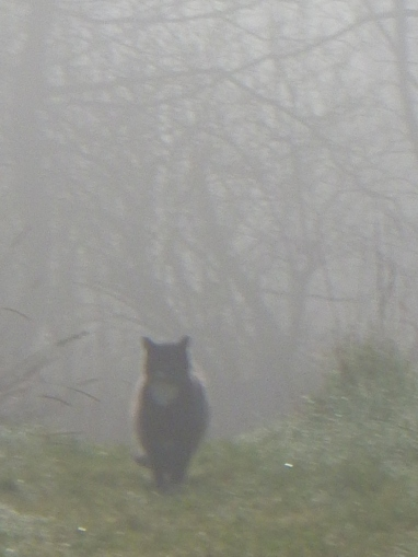 Cat in the Eclipse Mist