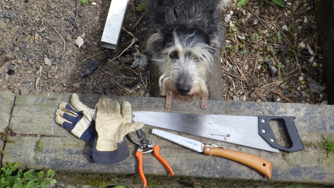 The Tools for the Job (Dog optional)
