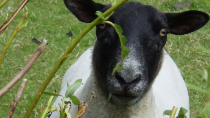 I've got my eye on ewe, I mean, you.