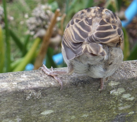 A Sparrow gets in on the act