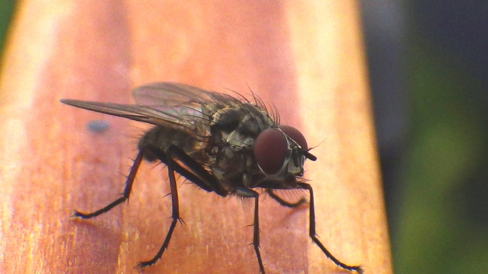 A Fly not living up to its name