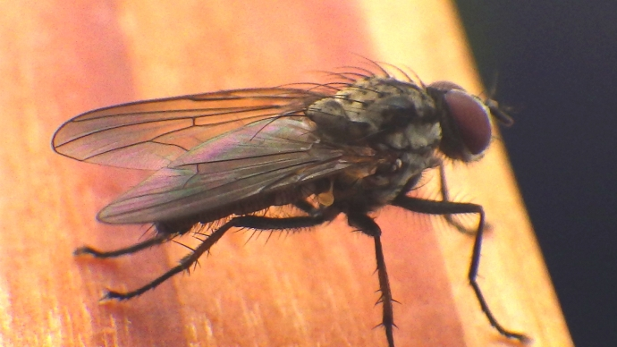 A A Fly still not living up to its name