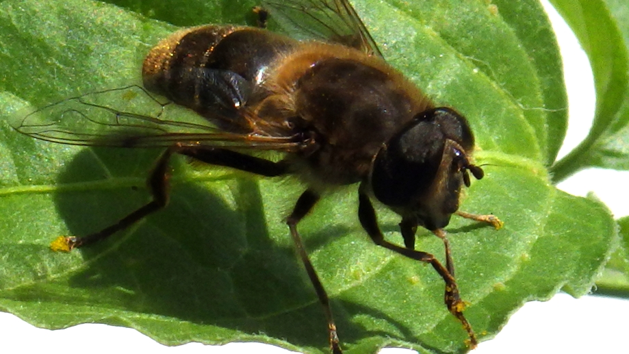 Bee. Leaf. Make up your own joke.