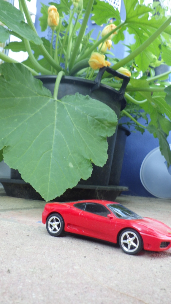 My runabout, shown next to the courgette plant for scale