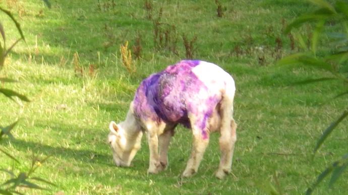 Purple Graze