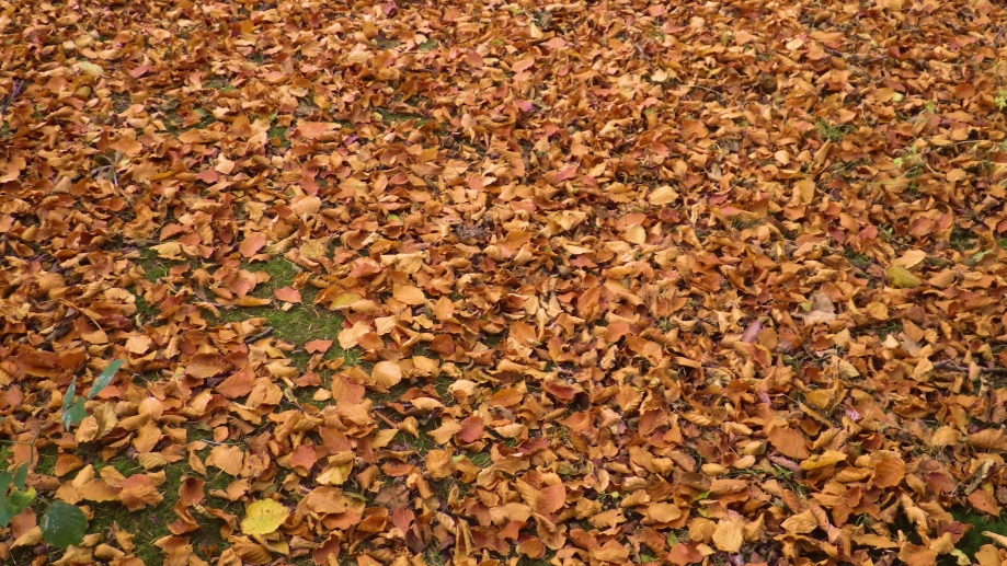 Carpet of Leaves at Denmark Farm